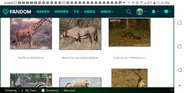 Walking With Serengeti Animals2