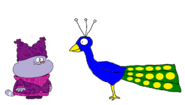 Chowder meets Indian Peafowl