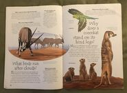 Desert Animals (Over 100 Questions and Answers to Things You Want to Know) (8)