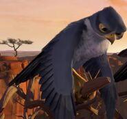 Falcon Kai