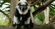 Life.of.Pi Lemur