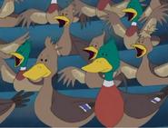 MTTDH Ducks