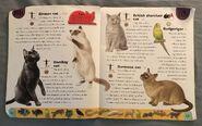 Pet Dictionary (3)