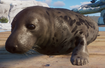 Seal, Grey (Planet Zoo)