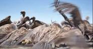 TLK 2019 Vultures