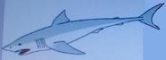 Batw-animal encyclopedia-shark