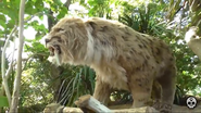 Chester Zoo Smilodon fatalis