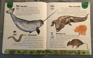 Deadly Creatures Dictionary (15)
