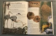 Birds (Eye Wonder) (18)