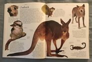 DK Encyclopedia Of Animals (25)