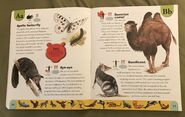 Endangered Animals Dictionary (2)
