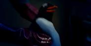 Little Miss Dolittle Penguin
