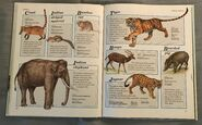 Macmillan Animal Encyclopedia for Children (26)
