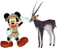 Mickey meets blackbuck