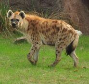 DAK Hyena (V2)