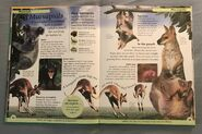 DK First Animal Encyclopedia (14)