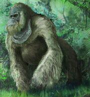 Gigantopithecus blacki.jpg