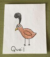 Quail Begins With Q