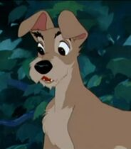 Tramp in Lady and the Tramp