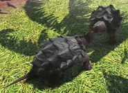 Alligator-snapping-turtle-zootycoon3