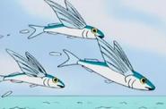 Batw 016 flyingfishes