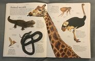 DK Encyclopedia Of Animals (34)