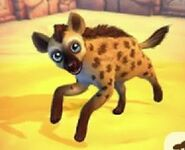 Spotted-hyena-zoo-2-animal-park