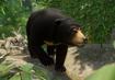 Sun-bear-planet-zoo