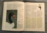 The Kingfisher Illustrated Encyclopedia of Animals (158)