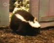 Zoboomafoo Skunk