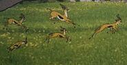 Gazelles in volume13 rileysadventures