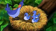 MTTDH Bluebirds