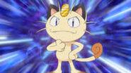 Meowth the Pokémon