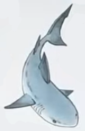 Shark usborne my first thousand words