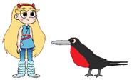Star meets Frigatebird