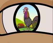 TN Chicken