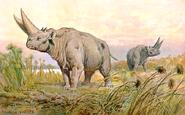 Arsinoitherium hharder