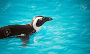 CUTE PENGUIN SWIMMING IN A ZOO