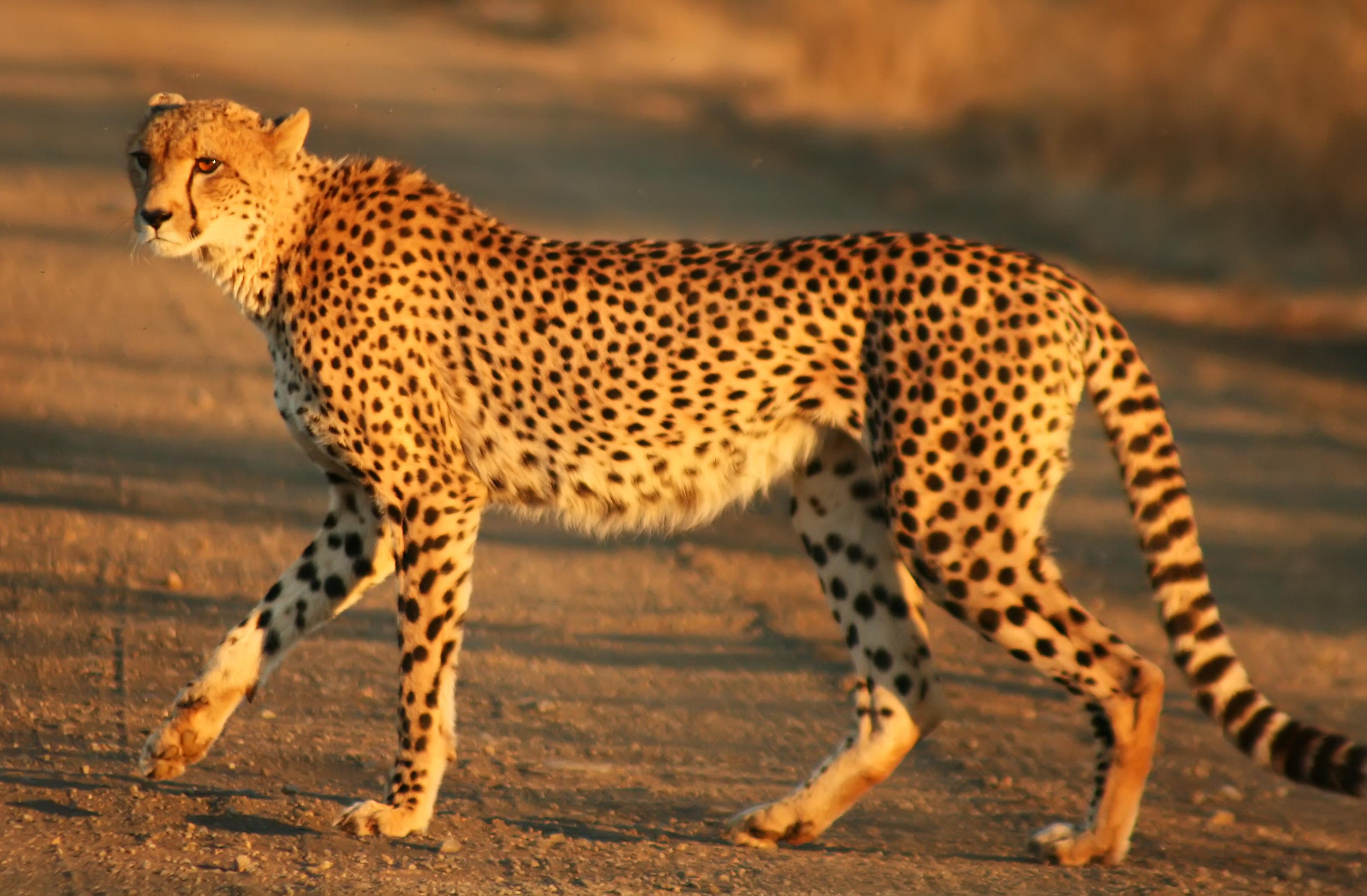 African Animal Wild Kratts