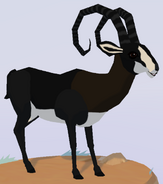 Sable Antelope WOZ