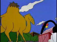 Simpsons Camel 2