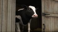 TTTE Cow