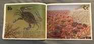 The Incredible Crab Alphabet Book (2)