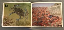 The Incredible Crab Alphabet Book (2).jpeg