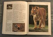 The Kingfisher Illustrated Encyclopedia of Animals (162)
