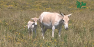 The Wilds Onagers