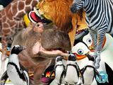 Africa Series (NatureRules1 Version)