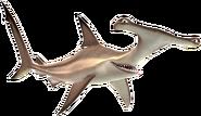 Anchor the Shark Transparent
