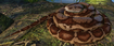 Boa Constrictor (Planet Zoo)