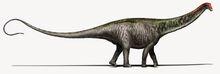 Brontosaurus Copyright DavideBonadonna-1.0.jpg